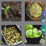 4 pics 1 word 6 letters sprout