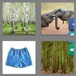 4 pics 1 word 6 letters trunks