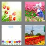 4 pics 1 word 6 letters tulips