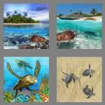 4 pics 1 word 6 letters turtle