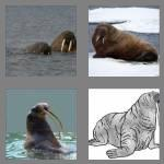 4 pics 1 word 6 letters walrus