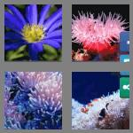 4 pics 1 word 7 letters anemone
