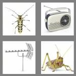 4 pics 1 word 7 letters antenna