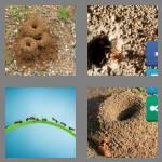 4 pics 1 word 7 letters anthill