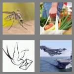 4 pics 1 word 7 letters carrier