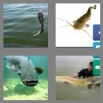 4 pics 1 word 7 letters catfish