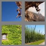 4 pics 1 word 7 letters climber