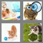 4 pics 1 word 7 letters curious