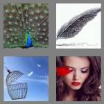 4 pics 1 word 7 letters feather