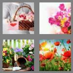 4 pics 1 word 7 letters flowers