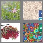 4 pics 1 word 7 letters flowery
