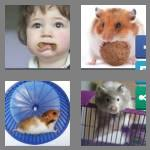 4 pics 1 word 7 letters hamster