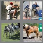 4 pics 1 word 7 letters harness