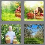 4 pics 1 word 7 letters orchard