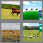 4 pics 1 word 7 letters pasture