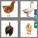 4 pics 1 word 7 letters poultry