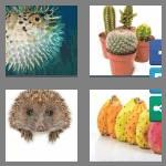 4 pics 1 word 7 letters prickly