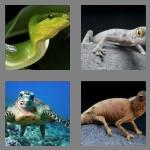 4 pics 1 word 7 letters reptile