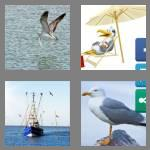 4 pics 1 word 7 letters seagull