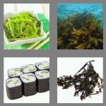 4 pics 1 word 7 letters seeweed