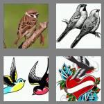 4 pics 1 word 7 letters sparrow