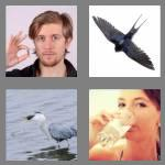 4 pics 1 word 7 letters swallow