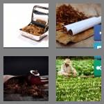 4 pics 1 word 7 letters tobacco