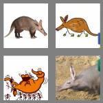 4 pics 1 word 8 letters aardvark