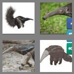 4 pics 1 word 8 letters anteater