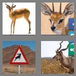 4 pics 1 word 8 letters antelope