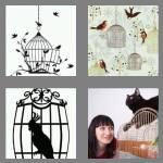4 pics 1 word 8 letters birdcage