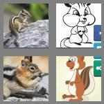 4 pics 1 word 8 letters chipmunk