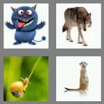 4 pics 1 word 8 letters creature