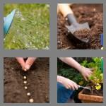 4 pics 1 word 8 letters planting