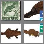 4 pics 1 word 8 letters platypus