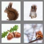 4 pics 1 word 8 letters squirrel