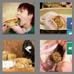 4 pics 1 word 8 letters stuffing