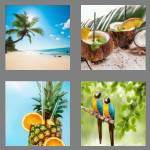 4 pics 1 word 8 letters tropical