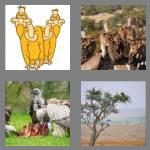 4 pics 1 word 8 letters vultures