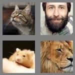 4 pics 1 word 8 letters whiskers