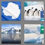 4 pics 1 word 9 letters antarctic