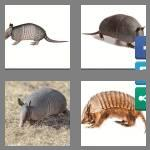 4 pics 1 word 9 letters armadillo