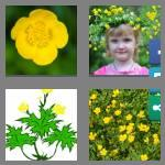4 pics 1 word 9 letters buttercup