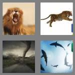 4 pics 1 word 9 letters ferocious