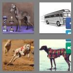 4 pics 1 word 9 letters greyhound